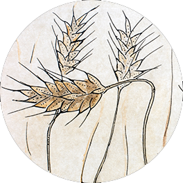 Prehistory Triggers Wheat